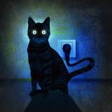 cat electric.jpg