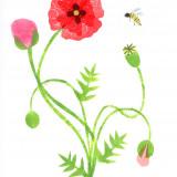 papavero+ape_bassa.jpg