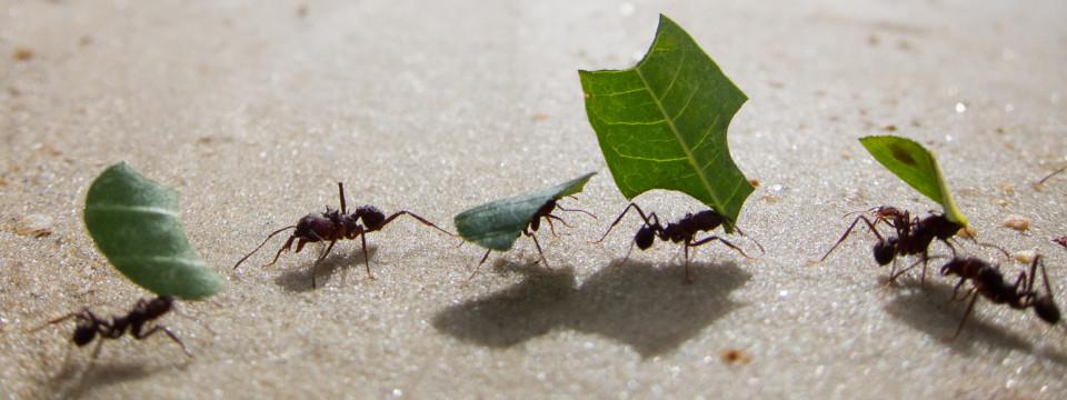 maestra natura-formiche.jpg