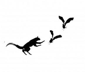 L'orchestra del gatto nero